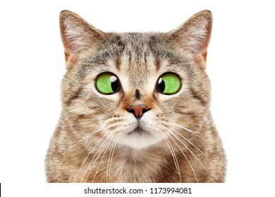 Portrait of funny cat with a fly on his nose, isolated on white background