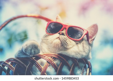 Portrait of funny cat wearing sunglasses lying in a basket outdoors in summer. Cat enjoying summer and looking at the sun