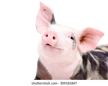 Portrait of funny cute piglet, closeup, isolated on a white background