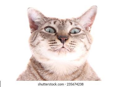 Portrait of funny face cat