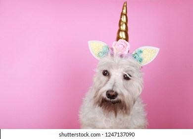 Portrait of funny unicorn little white schnauzer dog on pink background with copy space.