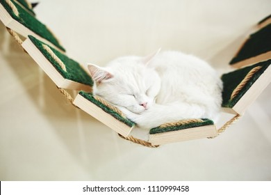 portrait of funny white cat with white wall background. the cat sleeps on the shelf on the wall