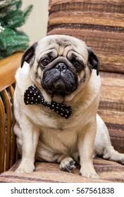 Portrait of gentleman.