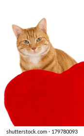 Portrait of a ginger cat behind a red heart pillow, isolated on white
