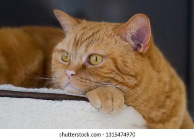 Portrait  of a ginger cat on a scyskraper