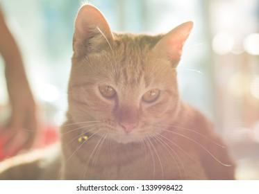 Portrait of Ginger Cat with Rim light