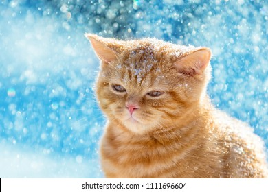 Portrait of a ginger little kitten walking in snow in winter at snowfall