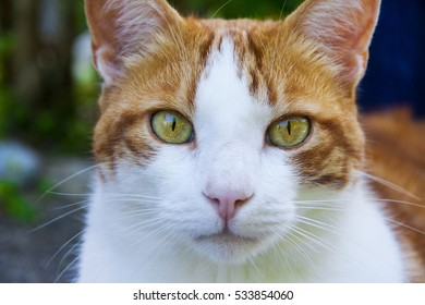 portrait of a ginger white pinto tabby cat with bright green eyes