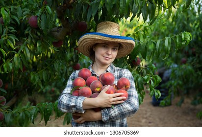 Portrait of girl horticulturist holding  stack of tasty peaches in garden