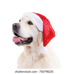portrait of a golden retriever in a Christmas hat