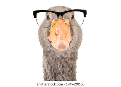 Portrait of a goose wearing glasses isolated on a white background