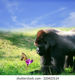 Portrait of gorilla and butterfly