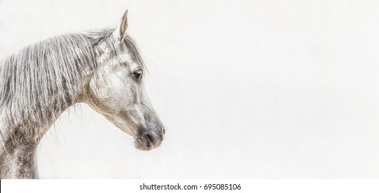 Portrait of gray arabian horse head on light background, Profile Pictures, banner