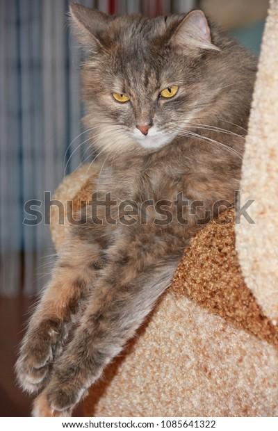 portrait-gray-cat-elongated-front-600w-1