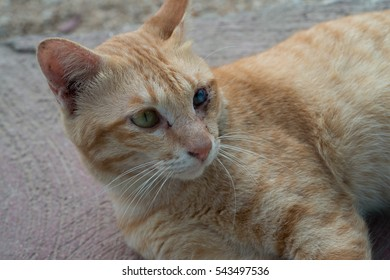 Portrait of green and blue eyed cat