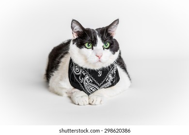 Portrait of a green eyed cat with a black bandana, white studio background.