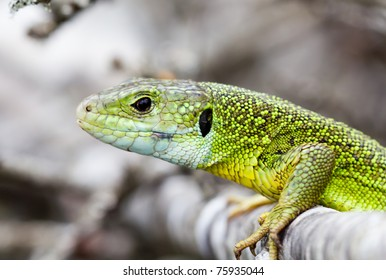 a portrait of a green lizard
