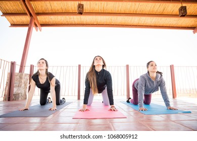 Portrait of group of hispanic women doing some interesting yoga poses in gym class. Cat cow pose.