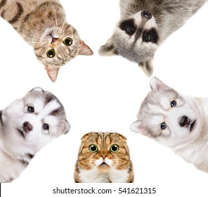 Portrait of a group of pets isolated on white background