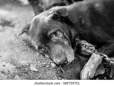 portrait of the guard dog laying in the kennel and looking with sorrow dog cute black sad eye,wait