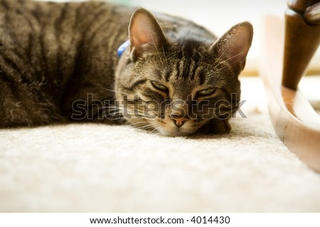 Černá lesiban kočička