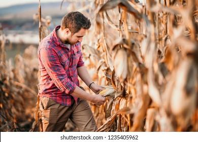 Portrait of handsome farmer harvesting the corn