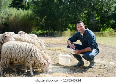 portrait of a handsome young shepherd veterinarian taking care of herd of sheep in small countryside farm