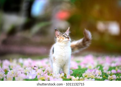 Portrait of happy 3 color cat chilling in pink white flowers garden with blurry background. Calico cat in garden.