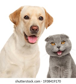 Portrait of a happy cat and dog, isolated on a white background