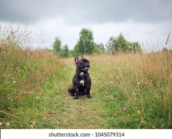 Portrait of a happy dog on a country road among fields