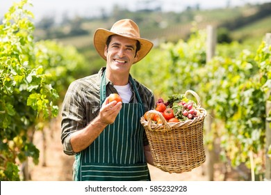 Portrait of happy farmer holding a basket of vegetables in the vineyard