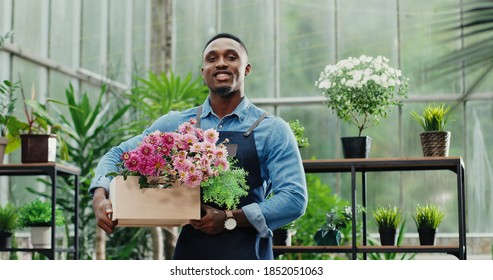 Portrait of happy handsome ypung African American businessman standing in apron in own flower shop and smiling to camera while holding floral box. Joyful male in green house at work. Floristry concept