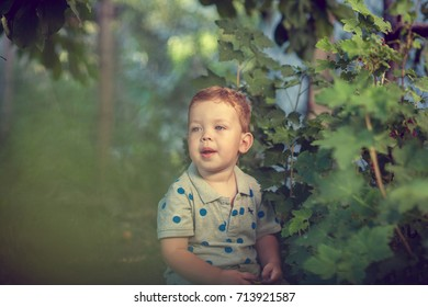 Portrait of a happy little boy in the park