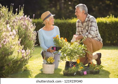 Portrait of happy senior couple gardening together in backyard