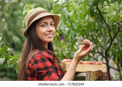 portrait of happy young woman gardener picking peaches from tree. Girl farmer. Harvesting of fruits