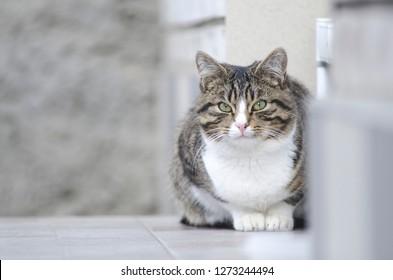 portrait of a homeless cat