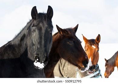 Portrait of a horse - Shutterstock ID 550912795
