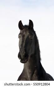 Portrait of a horse - Shutterstock ID 550912804
