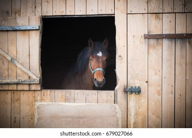 Portrait of a horse. Animal in stables