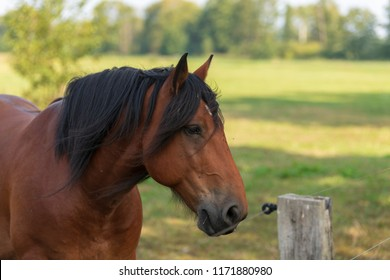 Portrait of a horse in the belt fence