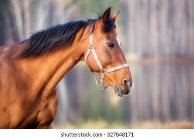 Portrait of a horse close up