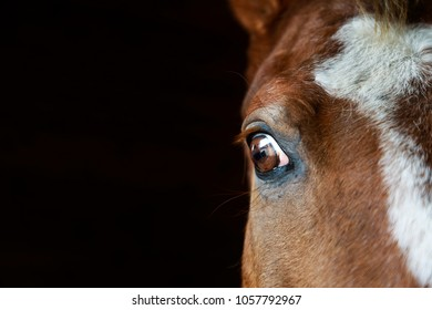 Portrait of the horse close-up on the dark background