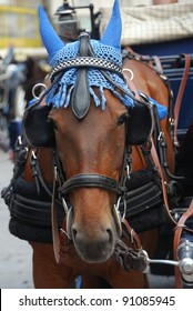 a portrait of a horse drawn carriage in Vienna Austria