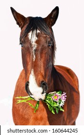Portrait Of Horse With Flowers Isolated On White