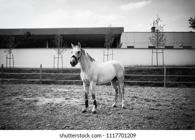 Portrait of a horse indoor in a riding hall
