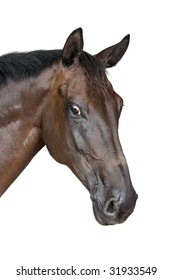 portrait of a horse isolated on a white background