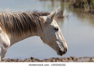 Portrait of a horse on nature in spring.
