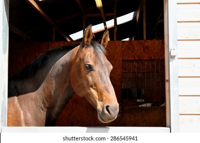 Portrait of a horse at the stables