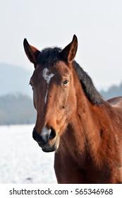 Portrait horse in winter