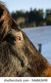 portrait of horse in the winter nature, close-up